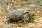 View tortois3's Profile