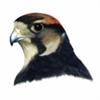 View FalconNL's Profile