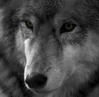 View wolfeter's Profile