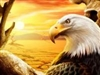 View EagleOfEnder132's Profile