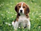 View BeaglesXD's Profile