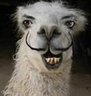 View Crazy_Llama's Profile