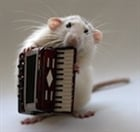 View RatWithAnAccordion's Profile
