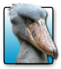 View Shoebill's Profile