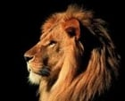 View thereallion1159's Profile