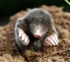View mole95's Profile