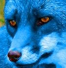 View IndigoFox's Profile