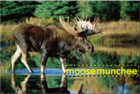 View moosemunchee's Profile