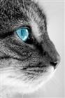 View LionHeartFighter's Profile