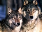 View WolfPack1524's Profile