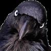 View nikkivixen's Profile