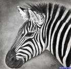 View Zebra_Lord's Profile
