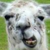View Llamasquishy's Profile