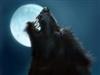 View Werewolf5153's Profile