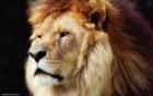 View Leo_Lion_King's Profile