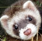 View Teh_Ferret_Master's Profile