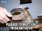 View Anteater42's Profile