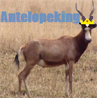 View antelopeking's Profile