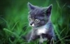 View thecat205's Profile