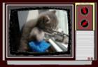 View videocat's Profile