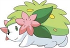 View shaymin_rocks's Profile