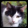 View seekercat's Profile