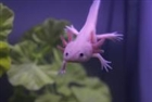 View Axolotl_Overlord's Profile