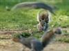 View SquirrelMan's Profile