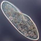 View paramecium13's Profile