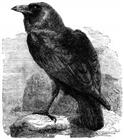 View ravenv12's Profile