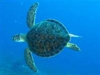 View Turtlelover212's Profile