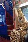 View ASingleGiraffe's Profile