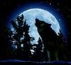 View Wolf_loverAndy's Profile