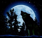 View Wolf_loverAndy's Profile