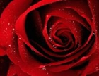 View Dark_Rose13's Profile