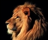 View ImperfectLion's Profile