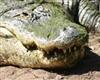 View Alligatornose's Profile