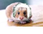 View Einsteinshamster's Profile