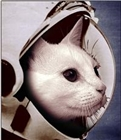 View caffstronaut's Profile