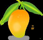 View MangoMiners1's Profile