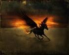 View Black_Pegasus's Profile