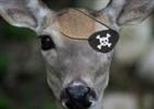 View Noeye_deer's Profile