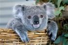 View Koala_brother's Profile