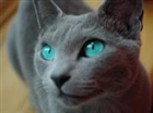 View Mistpool_of_RiverClan's Profile