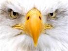 View linqui_eagle's Profile
