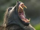 View Monkeyslayer101's Profile