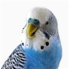 View budgieman92's Profile