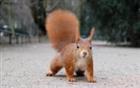 View Professor_Squirrel's Profile