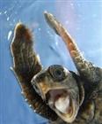 View Xile_Turtle's Profile