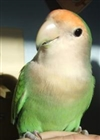 View SgtButchthebird's Profile